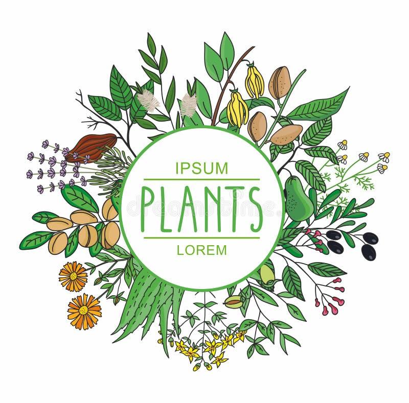Illustration de vecteur d'une usine Plante la collection illustration libre de droits