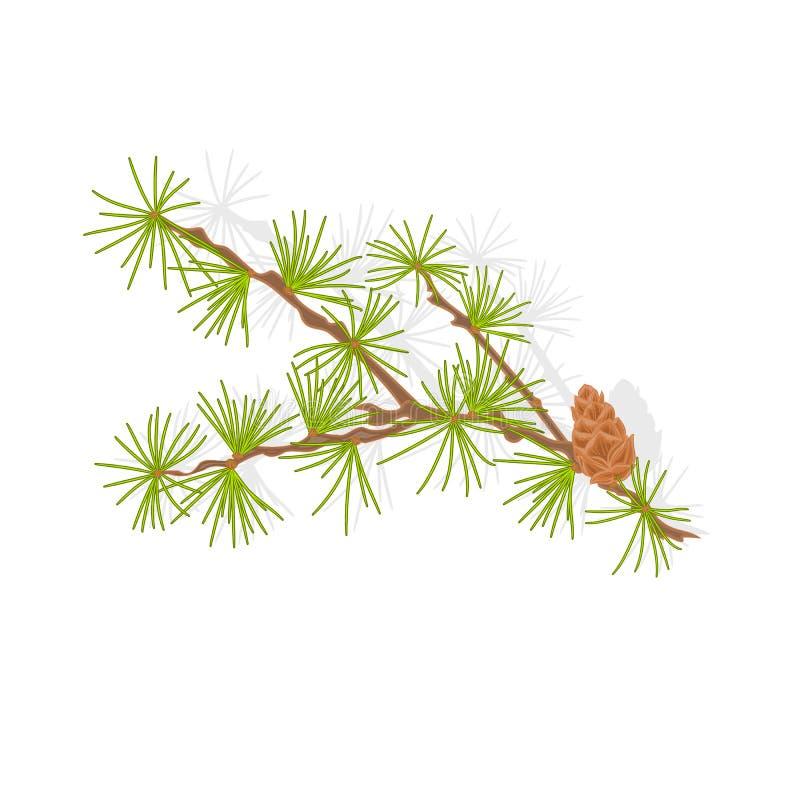 Illustration de vecteur de branche de tamarack de mélèze illustration libre de droits
