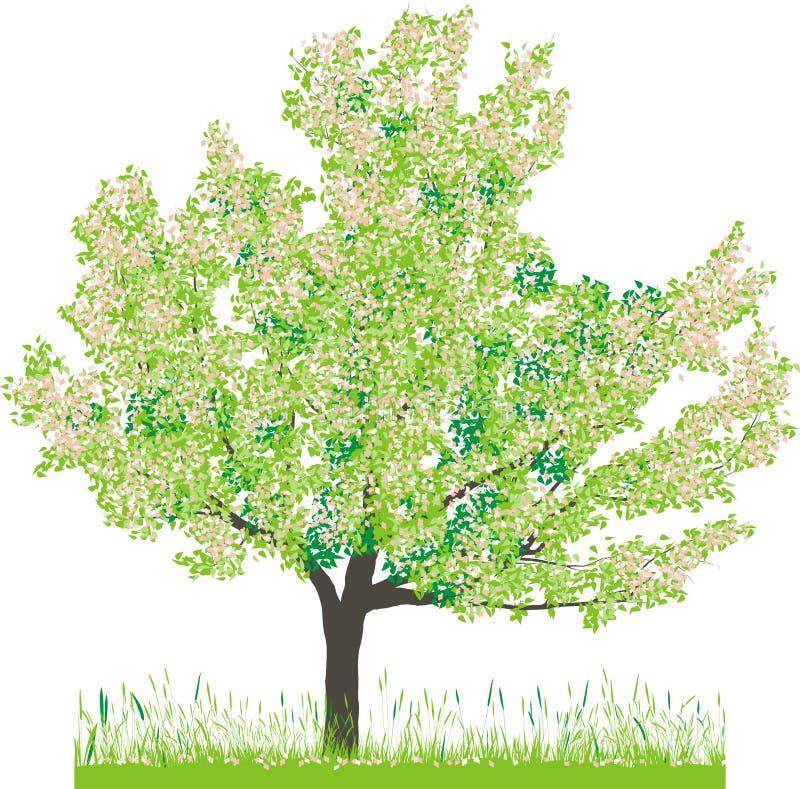 Illustration de vecteur de cerisier au printemps illustration de vecteur illustration du - Greffe du cerisier au printemps ...