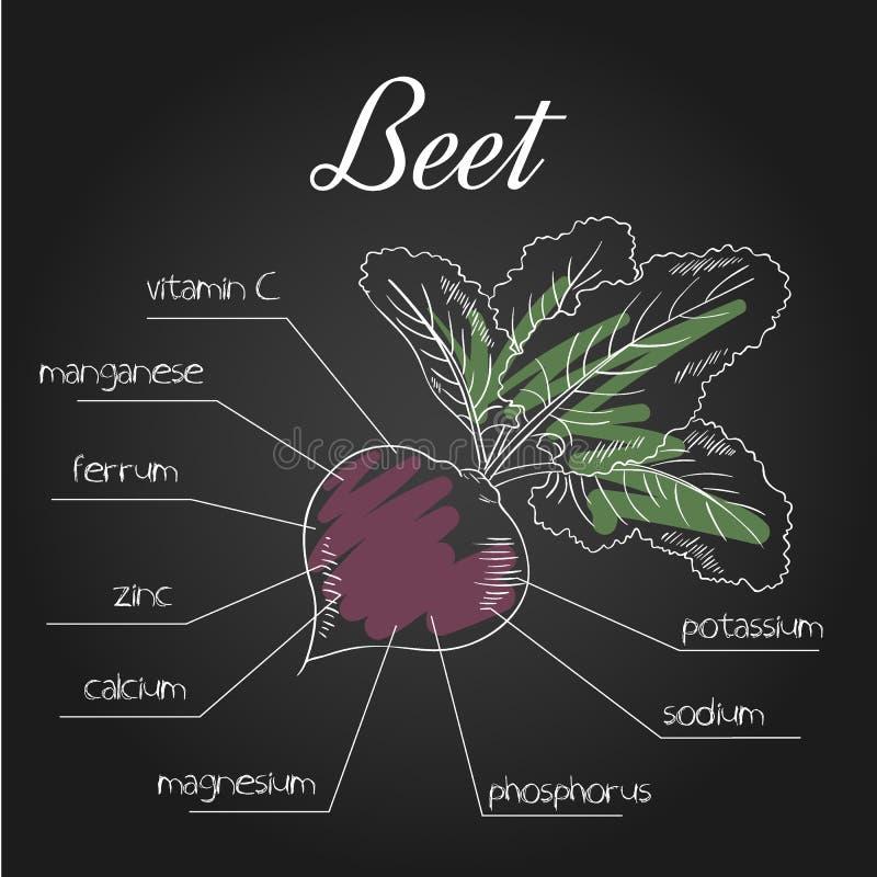 Illustration de vecteur de liste nutritive pour la betterave illustration libre de droits
