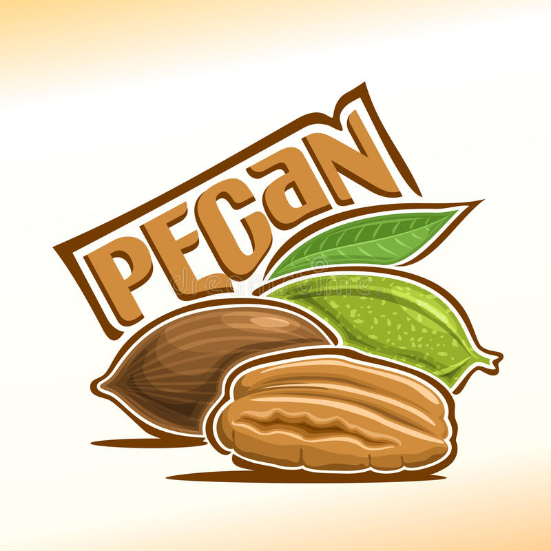 Illustration de vecteur de noix de pécan illustration de vecteur