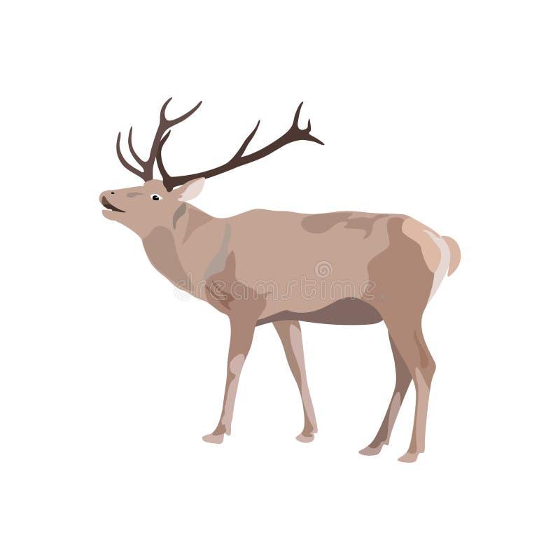 Illustration de vecteur des cerfs communs avec l'andouiller illustration de vecteur