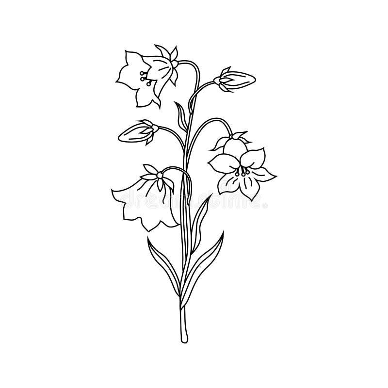 Illustration de vecteur des fleurs de cloche illustration libre de droits