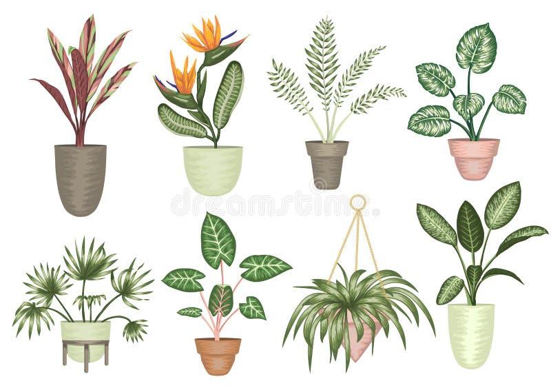 Illustration de vecteur des plantes d'intérieur tropicales dans des pots d'isolement sur le fond blanc illustration libre de droits