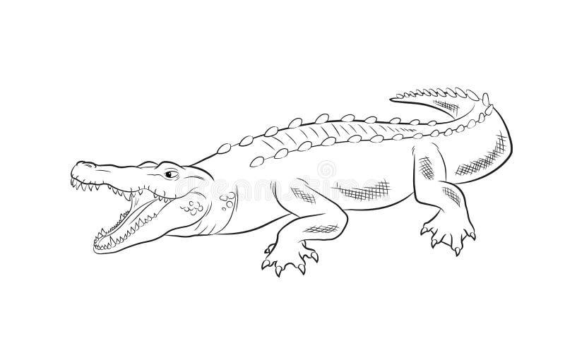 Illustration de vecteur de dessin de crocodile illustration libre de droits