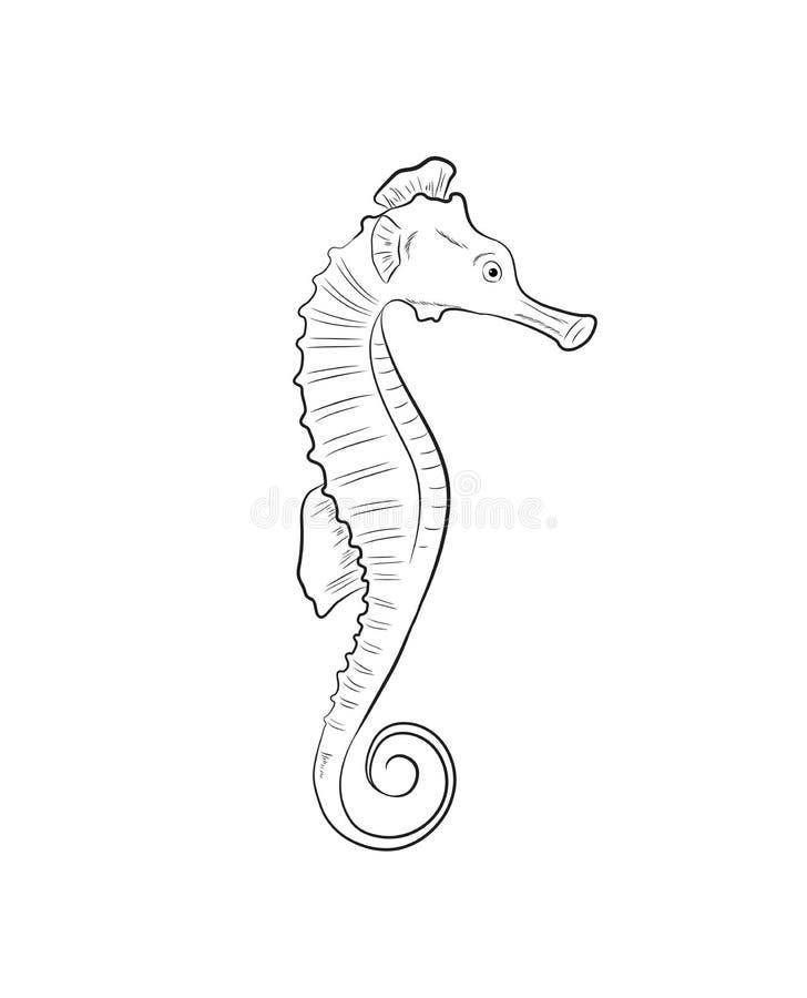 Illustration de vecteur de dessin d'hippocampe illustration stock