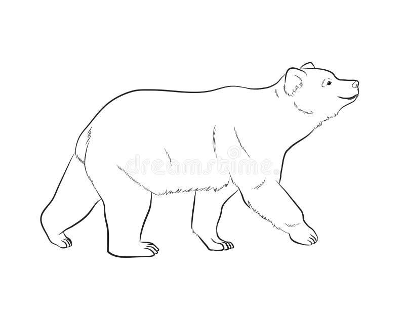 Illustration de vecteur de dessin d'ours illustration libre de droits