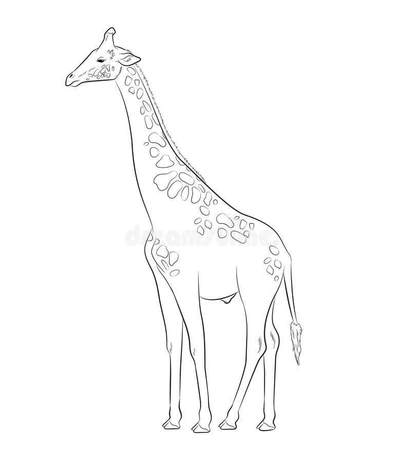 Illustration de vecteur de dessin de girafe illustration stock