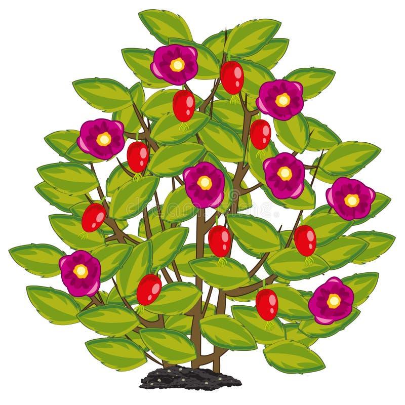 Illustration de vecteur du buisson de la rose sauvage avec la baie mûre illustration stock