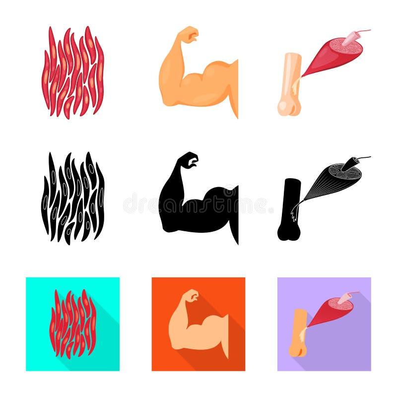 Illustration de vecteur de fibre et d'ic?ne musculaire Collection de symbole boursier de fibre et de corps pour le Web illustration libre de droits