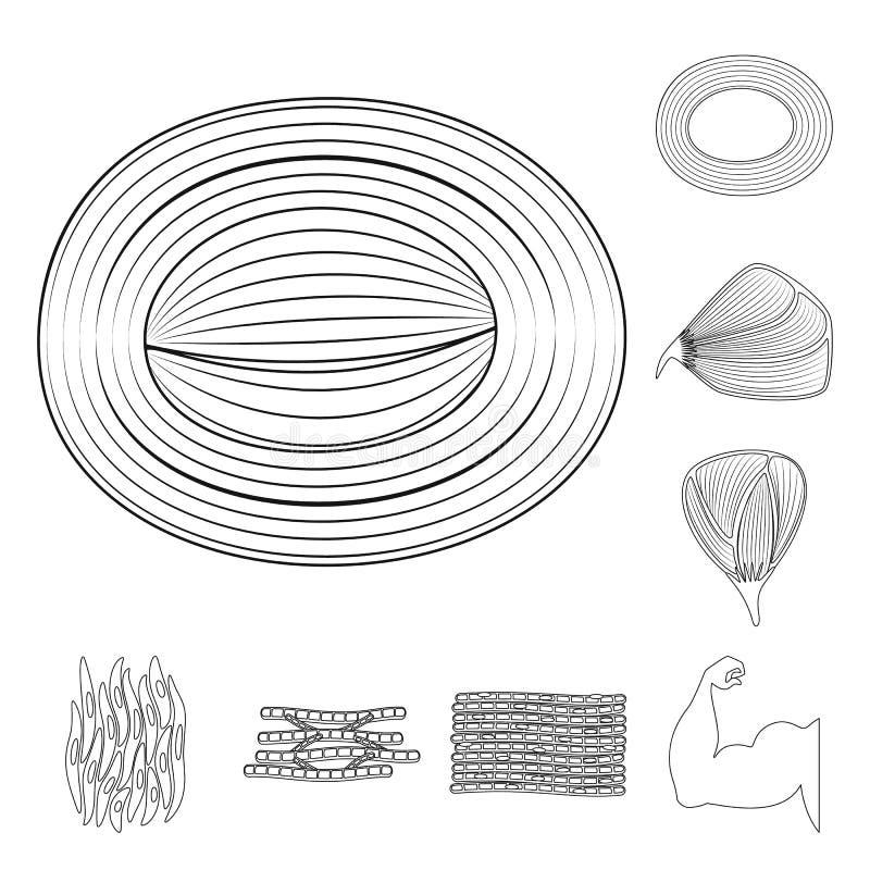 Illustration de vecteur de fibre et d'ic?ne musculaire Placez du symbole boursier de fibre et de corps pour le Web illustration de vecteur