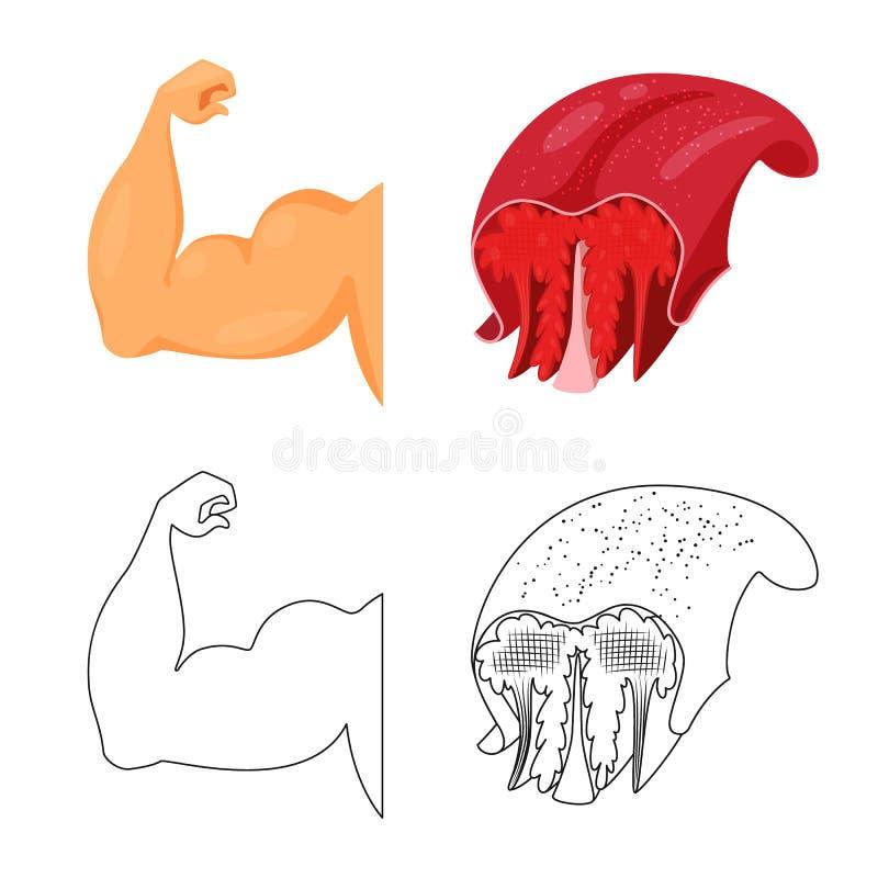 Illustration de vecteur de fibre et de signe musculaire Collection d'illustration de vecteur d'actions de fibre et de corps illustration de vecteur