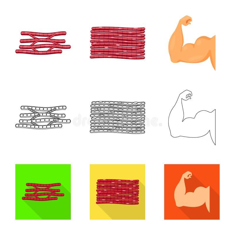Illustration de vecteur de fibre et de signe musculaire Placez de l'illustration de vecteur d'actions de fibre et de corps illustration stock