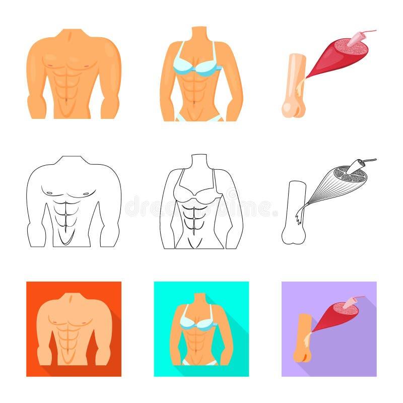 Illustration de vecteur de fibre et de symbole musculaire Collection de symbole boursier de fibre et de corps pour le Web illustration libre de droits