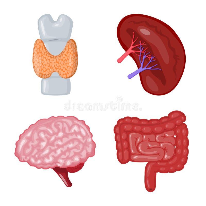 Illustration de vecteur de logo d'anatomie et d'organe Collection d'anatomie et ic?ne m?dicale de vecteur pour des actions illustration stock