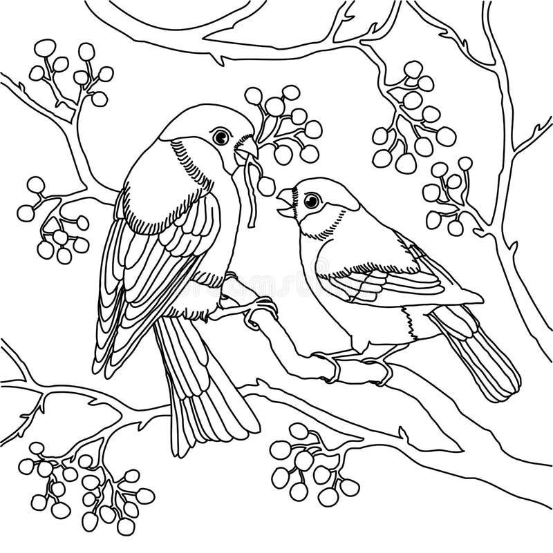 Illustration de vecteur de paires de bouvreuil illustration stock