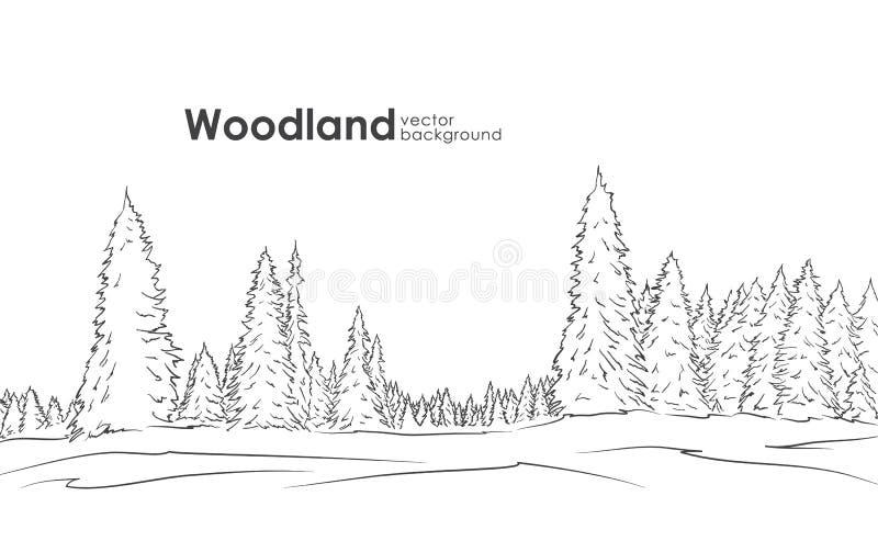 Illustration de vecteur : Paysage tiré par la main de région boisée Croquis avec la forêt de pin illustration libre de droits