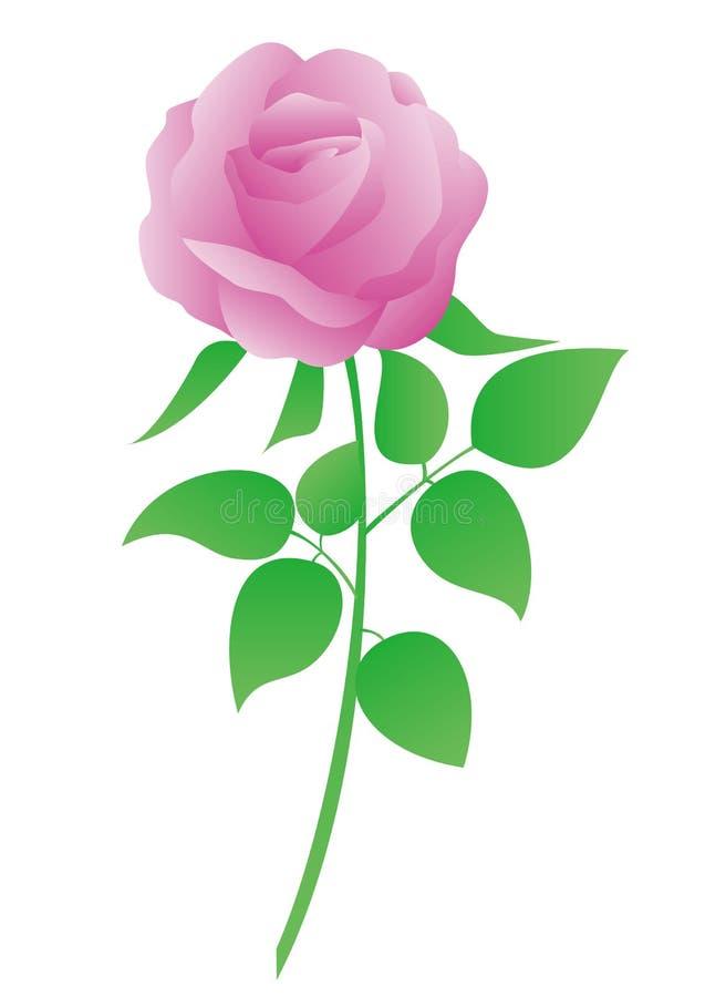 Illustration de vecteur de rose de rose image libre de droits