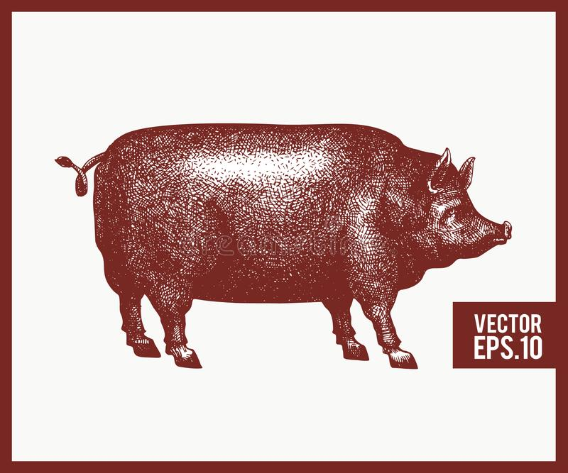 Illustration de vecteur de silhouette noire de porc Rétro style de gravure Dessin d'animal de ferme de croquis illustration stock