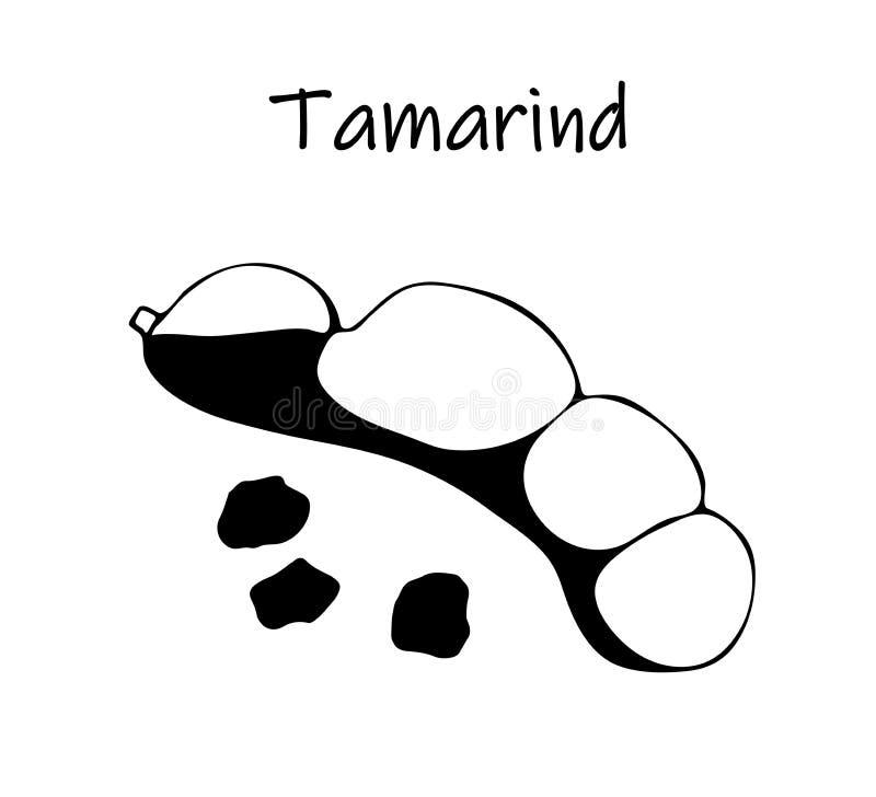 Illustration de vecteur de tamarinier noir, kranzhi, prune de tamarinier - haricots asiatiques illustration stock