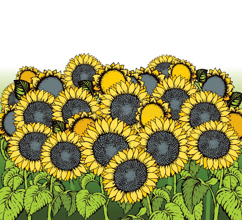 Illustration de vecteur Tournesols illustration stock