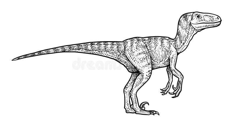Illustration de Velociraptor, dessin, gravure, encre, schéma, vecteur illustration libre de droits