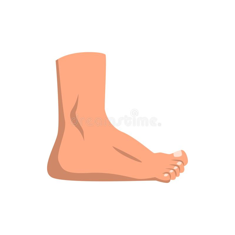 Illustration debout de vecteur de pied humain sur un fond blanc illustration libre de droits