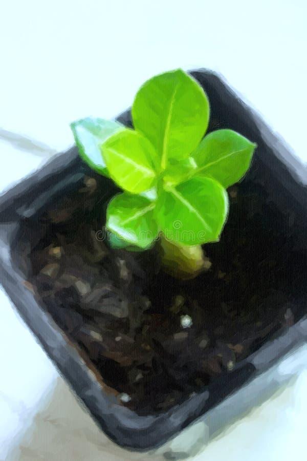 Illustration der Adenium obesum Wüstenrose-Impalalilien-Spottazalee lizenzfreie abbildung
