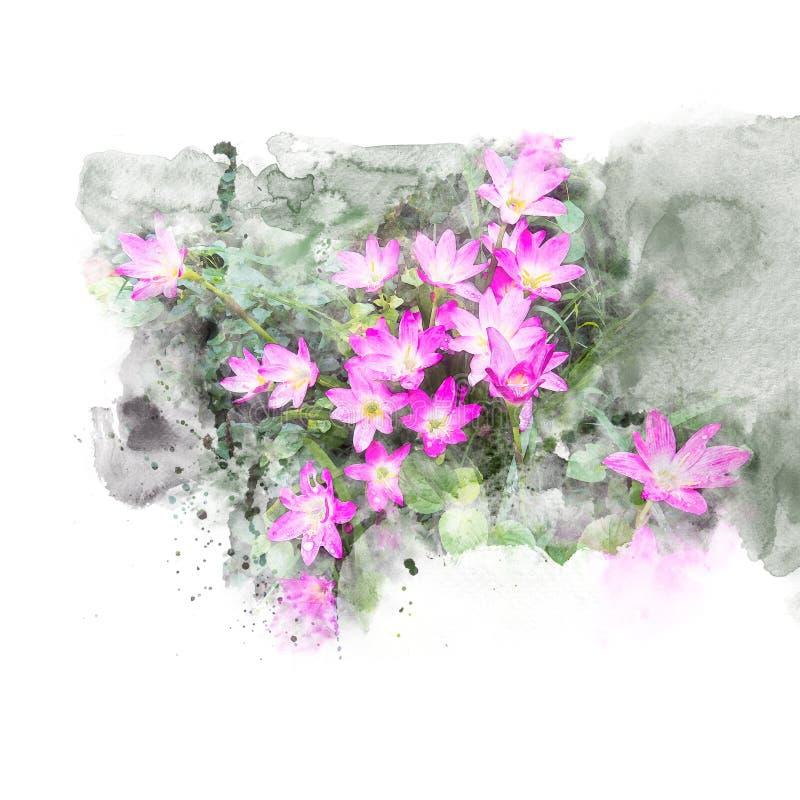 Illustration der Blütenrosaregen-Lilienblume lizenzfreie abbildung