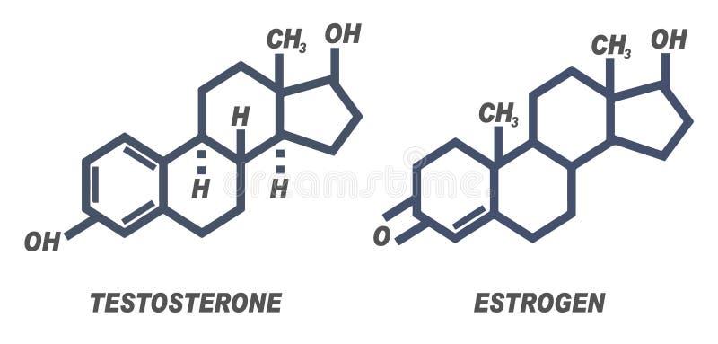 Illustration der chemischen Formel für die männlichen und weiblichen Hormone Testosteron und Östrogen stock abbildung
