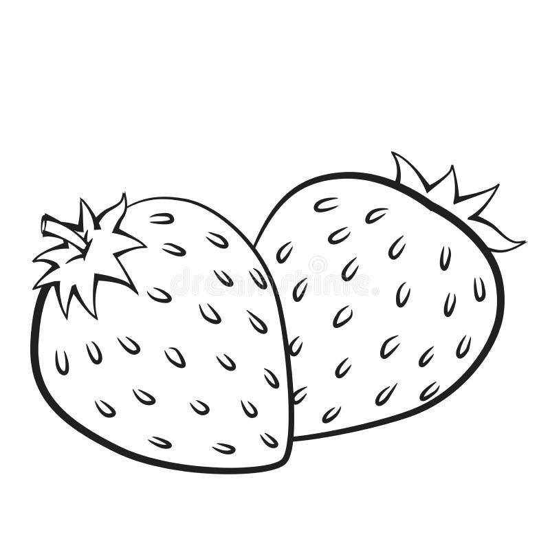 Illustration der Erdbeere, Vektor-Illustration stock abbildung