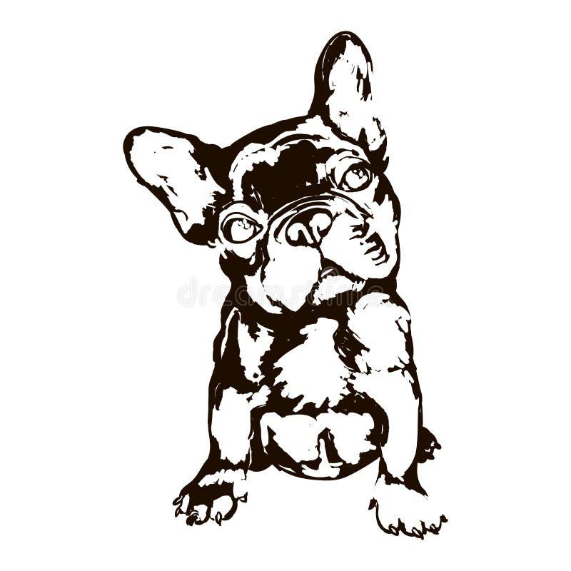 Illustration der französischen Bulldogge der Hunderasse lizenzfreie abbildung