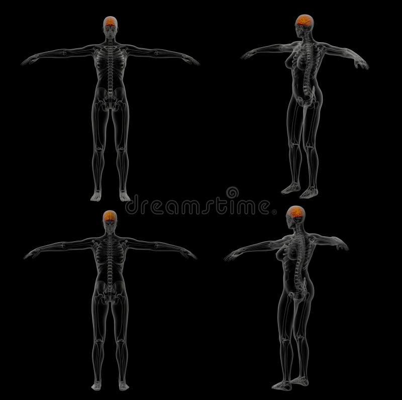 Illustration der Wiedergabe 3D des Gehirns stock abbildung