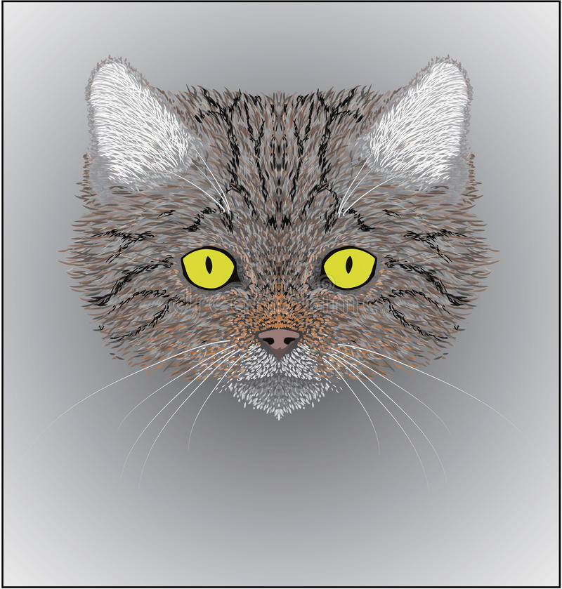 Illustration der Wildkatze Felis silvestris lizenzfreie stockfotos