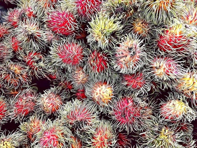 Illustration des fruits de ramboutan avec le style de bande dessinée, la fin de fruit tropical vers le haut de et le fond illustration libre de droits