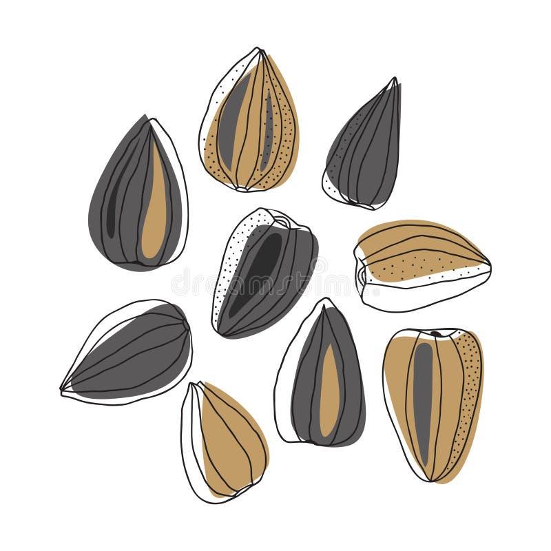 Illustration des graines de tournesol illustration stock