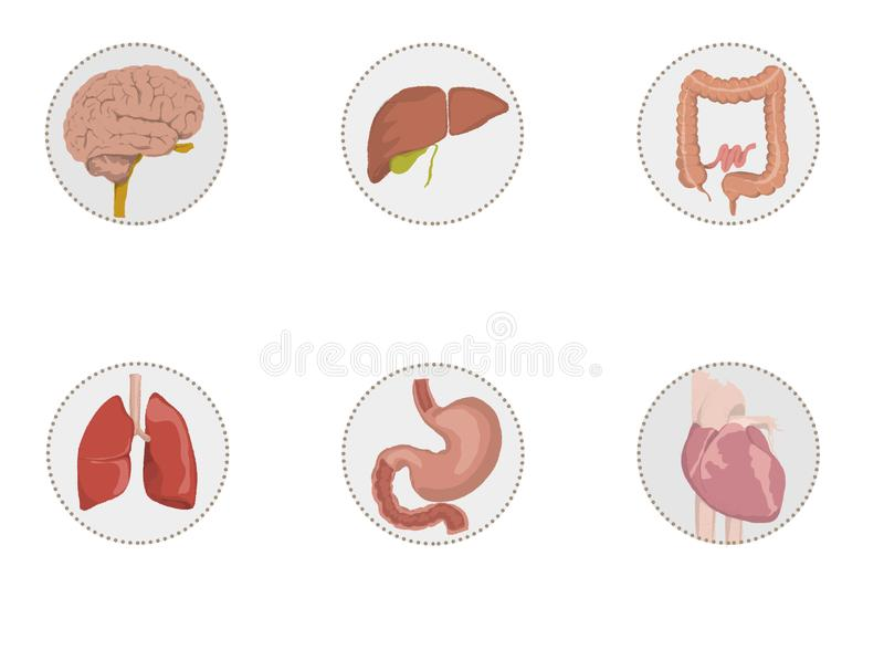 Illustration des icônes des organes humains, coeur, cerveau, foie, intestin, estomac, poumons illustration libre de droits