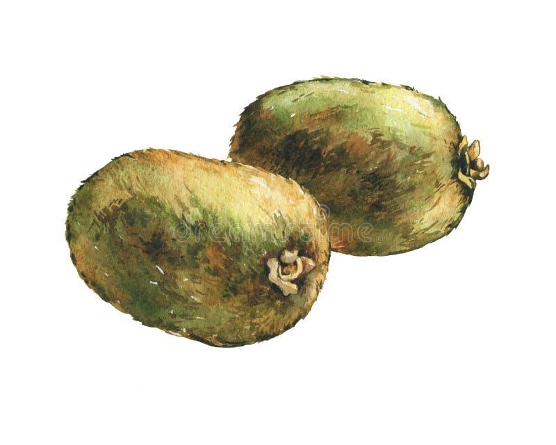 Illustration des kiwis entiers de fruit frais illustration stock