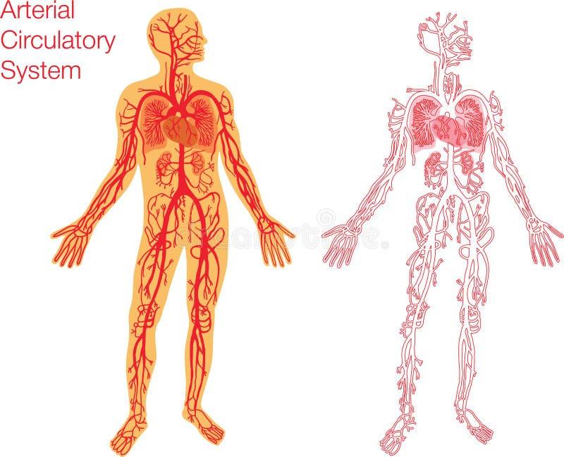 Gemütlich Anatomie Kreislaufsystem Bilder - Anatomie Ideen - finotti ...