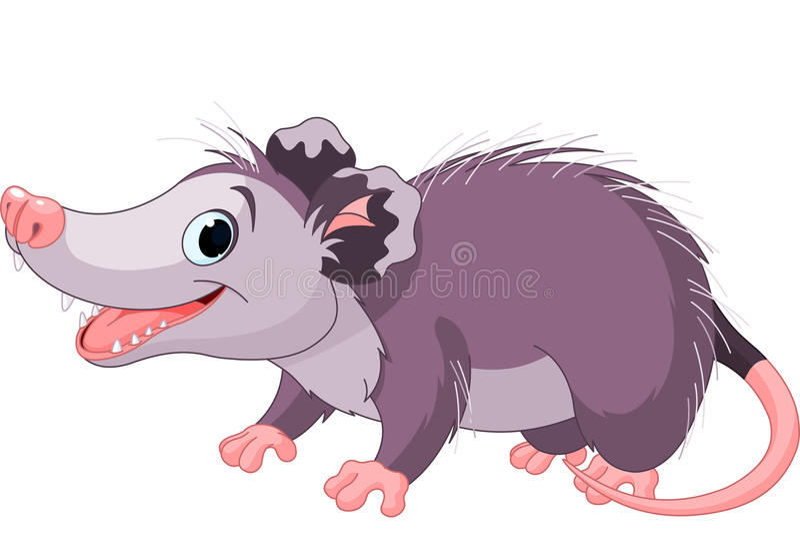 Opossum stock abbildung