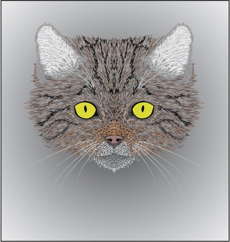 Illustration des silvestris sauvages de Felis de chat photos libres de droits