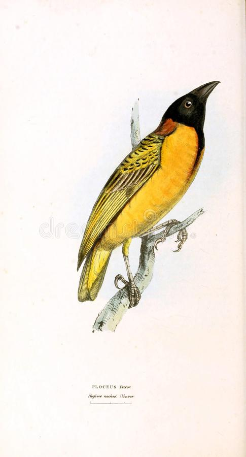 Illustration des Tieres vektor abbildung