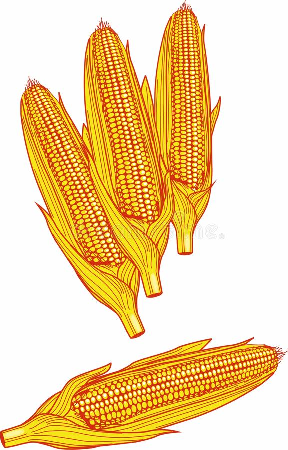 Ears of corn in detailed rendering. royalty free stock photography
