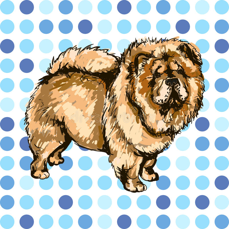 Illustration of the dog breed Chow Chow royalty free illustration