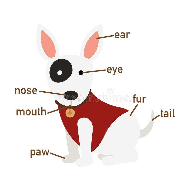 Illustration Of Dog Vocabulary Part Of Body Stock Vector ...