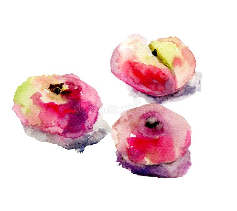 Illustration of Donut peaches vector illustration