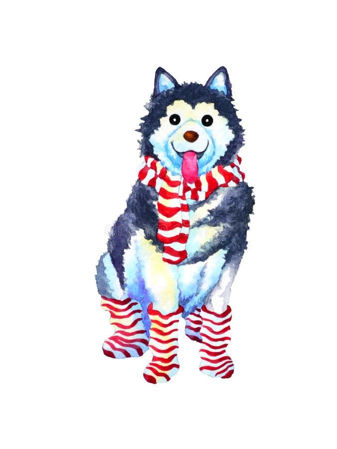 Illustration drôle enrouée sibérienne de peinture d'aquarelle de chien d'art illustration de vecteur