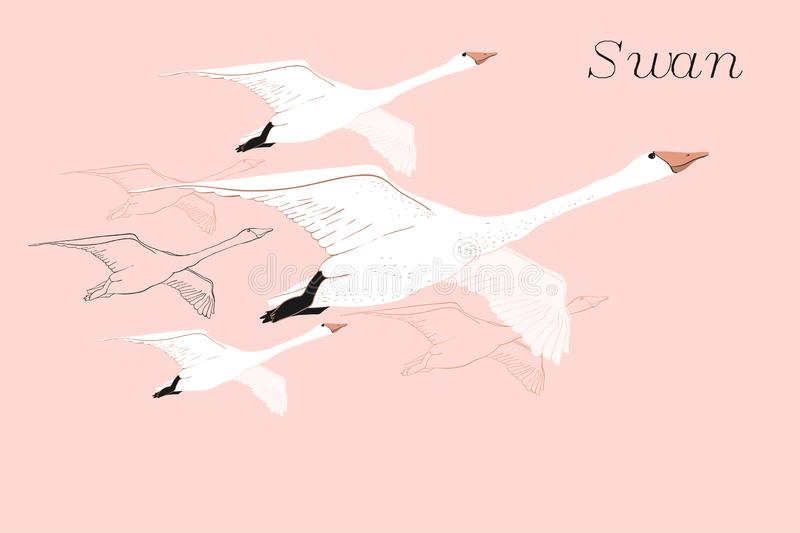 Illustration of drawing Flying Swans. Hand drawn, doodle graphic design with birds. Isolated object on blue backdrop. stock images