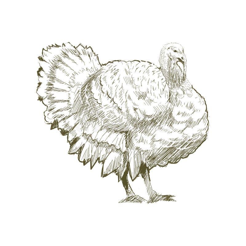 Illustration drawing style of turkey royalty free illustration