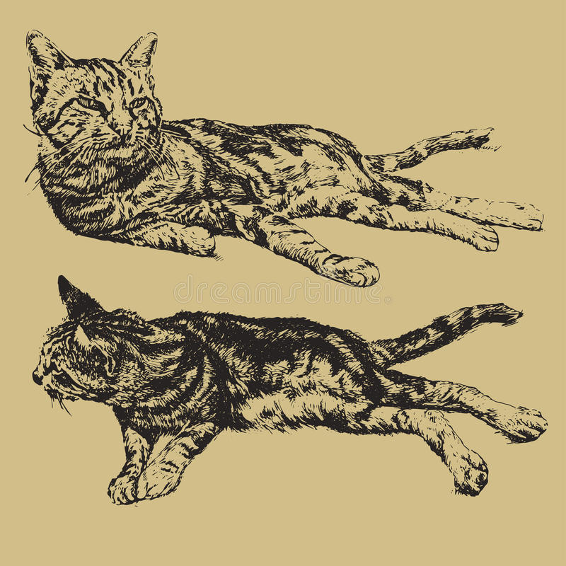 Illustration du mensonge de deux chats illustration stock